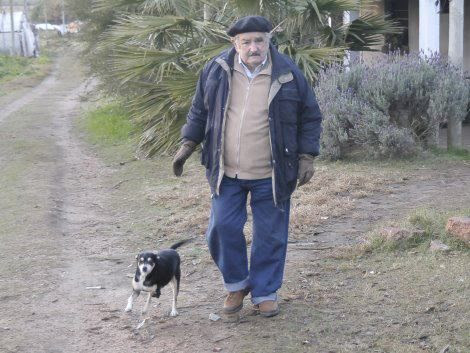 only security 3 legged dog.4