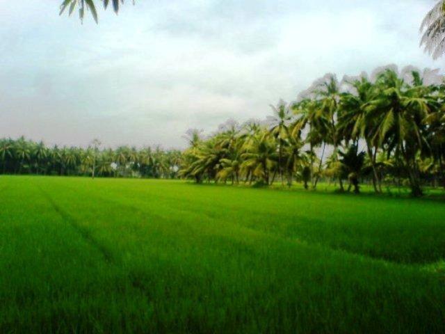 green-village