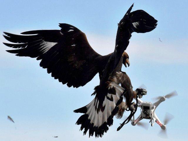eagle-done-2