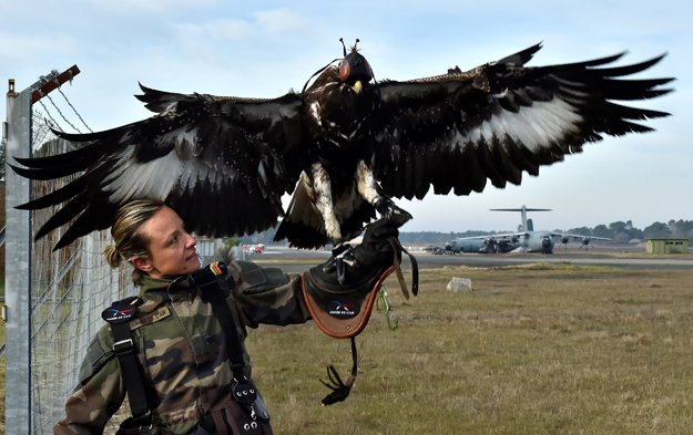 french-army-eagle-1